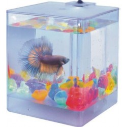 Mini Acuario Acrilico oAqua Box Betta? Con led